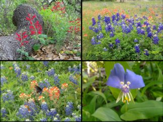 Wildflowers (click to enlarge)