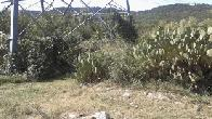 2016 cactus garden at buzzard tower in Canyonlands (click to enlarge)