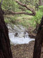 Yaupon Creek by Bird Blind (click to enlarge)