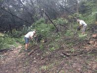 Larry and Anthony clearing fallen cedars (click to enlarge)