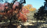 Fall colors at HGB (click to enlarge)