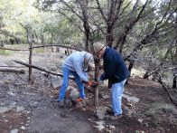 Terry and Bill replacing rail in native cedar fence (click to enlarge)