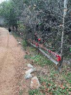 Christmas decorations along HGB I trail